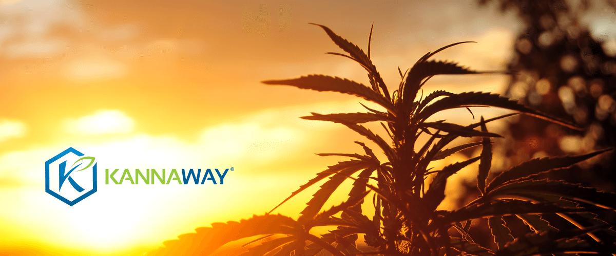 Medical Marijuana, Inc. Subsidiary Kannaway® Announces New Pure Gold Hemp CBD Oil With No Detectable THC