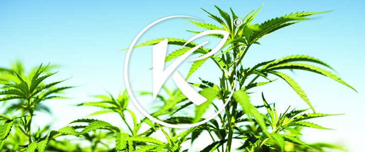 Kannaway most popular CBD company HealthMJ